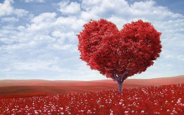 arbol con forma de corazon
